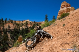 Bryce-Canyon_JeanLucHauser.com-3